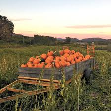Johnson Farms Pumpkin Patch by Wscc To Hold Fundraiser At Myers Pumpkin Patch Local News