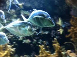 piranha picture of aquarium la rochelle la rochelle tripadvisor