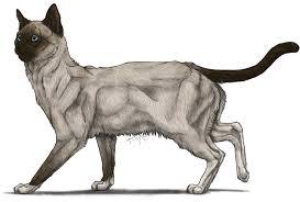 snowshoe cat snowshoe cat by riixon on deviantart