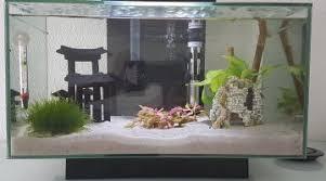 petits poissons originaux pour un aquarium de 260 litres