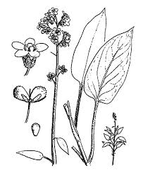 Lavender Flower Part By Coloring Pages