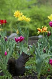 bulbs avoided by squirrels information on flower bulbs that