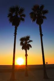The Setting Sun In Huntington Beach CA 3 Palm Trees Line Love Gradient Color Of Sky