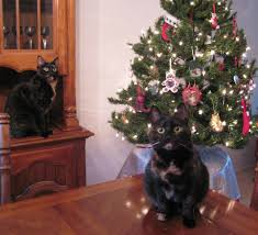 Best Type Of Artificial Christmas Tree by Cats And Christmas Trees