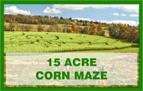 Best Pumpkin Farms In Maryland by Jumbo U0027s Home