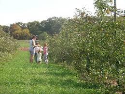 Pumpkin Farms In Belleville Illinois by Website Web 027 Jpg