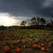 Pumpkin Picking Farms In Maryland by Larriland Hashtag On Twitter