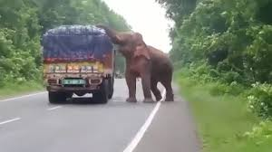 Elephant Stops And Eats Potatoes From Truck On Road - YouTube Our Facilities Services Ashford Intertional Truck Stop Rv Truck Stops At Hotels For Truckers By Jonas Cameron Issuu An Ode To Trucks Stops An Rv Howto For Staying At Them Girl North Carolina Stop To Get Idleair Electrification Stations National Directory The Truckers Friend Robert De Vos Facility Upgrades Pilot Flying J Killer Gq Elephant And Eats Potatoes From On Road Youtube Iowa 80 Truckstop Onboarding Truckstopcom