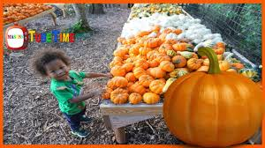 Pumpkin Patches In Oklahoma by Pumpkin Patch 2017 Parkhurst Petting Zoo Hay Ride Corn Maze Tire
