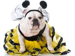 Halloween Warehouse Beaverton Oregon Hours by Pet Halloween Costumes 2017 These Are The Most Popular