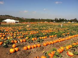 Gust Brothers Pumpkin Farm by 8 Best Pumpkin Patches In Michigan 2016