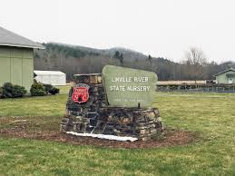 Christmas Tree Farm For Sale Boone Nc by Lawmakers Christmas Tree Association Want To Save Linville River