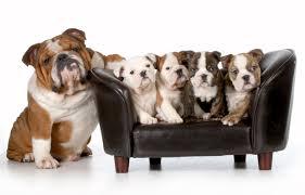 hund im bett schlafen wieder abgewöhnen hunde tipps und infos