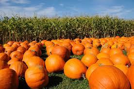 Pumpkin Patch Ct by Pumpkin Patches Brandon Seibel Colorado Real Estate Denver