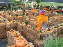 Pumpkin Patch Okc Area by Best 25 Hay Maze Ideas On Pinterest Fall Fest Halloween
