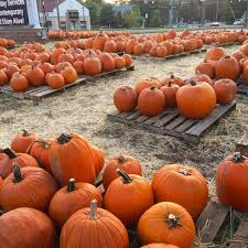 Atlanta Pumpkin Patch Corn Maze by Autumn In Atlanta Paige Minds The Gap