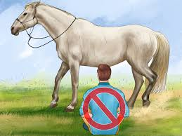 Horse Hair Shedding Tool by How To Groom A Horse 13 Steps With Pictures Wikihow