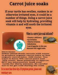 carrot juice soak for turtle tortoise my turtle tortoise care