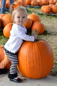 Pumpkin Patch Portland by Best 25 Local Pumpkin Patch Ideas On Pinterest Mums And