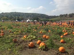 Pumpkin Patch Cal Poly Pomona by Shoes Dogs And Chocolate Cal Poly Pomona Pumpkin Festival