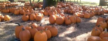 Pumpkin Patch Near Pensacola Fl by Sweetfields Farm