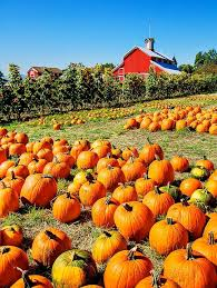 Pumpkin Patches In Bakersfield Ca by 87 Best Local Hangouts Images On Pinterest Ventura California