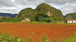A Tobacco Field And House In Vinales Cuba Next To Mogote