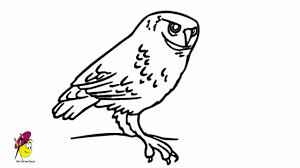 Drawing Cute How To Draw An Owl Easy 26 Maxresdefault Flying