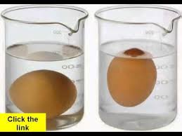 bad eggs float or sink why do rotten eggs float and sink fresh