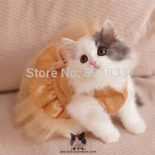 cat wedding dress gold top dress picture more detailed picture about luxury cats