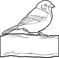 Free Printable Sparrow Coloring Page For Kids