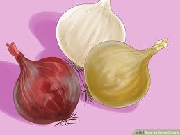 expert advice on how to grow onions wikihow