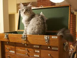 Do Maine Coons Shed Their Mane by Kittehs Making Headlines U2013 Meowingtons