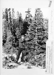 Shasta Red Fir Christmas Tree Email Facebook Google Twitter 0 Comments