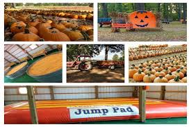 Southern Illinois Pumpkin Patches by Bandy U0027s Pumpkin Patch