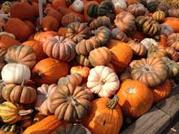 Lehner Pumpkin Farm by The Best Pumpkin Patches For Picking Your Own Jack O U0027 Lantern