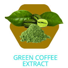 Rich Dark Roast Coffee Espresso Organic Cocoa Canola Lecithin Green Tea L Theanine PEA Beta Phenylethylamine HCL Extract