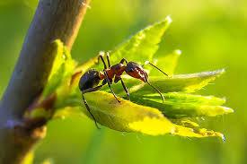 weshalb backpulver gegen ameisen keine gute idee ist