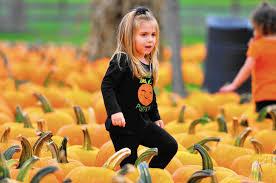 Pumpkin Patch In Homer Glen Illinois by Bengtson U0027s Pumpkin Fest Opens Daily Southtown