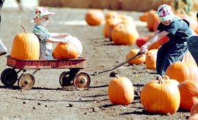 South San Jose Pumpkin Patch by Park It Ardenwood Harvest Festival Coming Up Oct 7 8