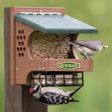 256 best Bird Feeding images on Pinterest