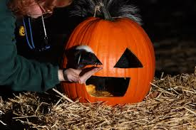 Snoopy Pumpkin Carving Kit by All Aboard The Peanuts Great Pumpkin Patch Express Visit Rainier