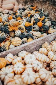 Half Moon Bay Pumpkin Patch by The 25 Best Pumpkin Farm Ideas On Pinterest A Maze In Corn