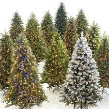Christmas Tree Has Aphids by Choosing A Christmas Tree