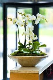 Best Pot Plant For Bathroom by Classy Artificial Plants For Bathrooms Image Artificial Plants