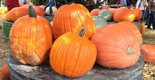 Best Pumpkin Patch Des Moines by Pumpkin Patches For Fall Fun