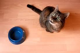 cats and yogurt information on yogurt for cats cuteness