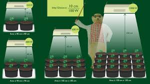 1000 Watt Hps Lamp Height how to yield more from the same grow lights blog about cannabis