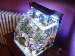 pico de 15 litres eau de mer aquarium marin et eau douce