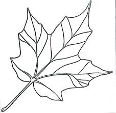 Maple Coloring Pages Leaf Pin Simple 4